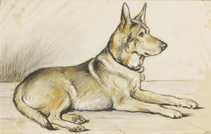 Art Prints of German Shepherd by Lucy Dawson