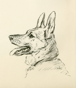 Art Prints of German Shepherd, Facing Left by Lucy Dawson