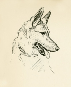 Art Prints of German Shepherd, Facing Right by Lucy Dawson