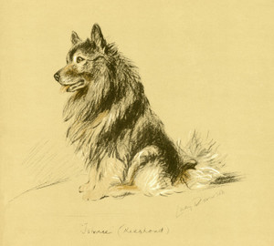 Art Prints of Johnny, the Keeshond 2 by Lucy Dawson