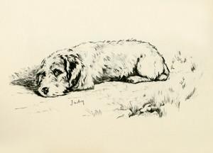 Art Prints of Judy by Lucy Dawson