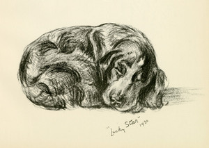 Art Prints of Lucky Star, Spaniel by Lucy Dawson