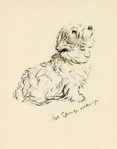 Art Prints of Mrs. Sponge Wakes Up, Sealyham by Lucy Dawson