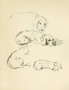 Art Prints of Oonagh 3, Wire Haired Dachshund by Lucy Dawson
