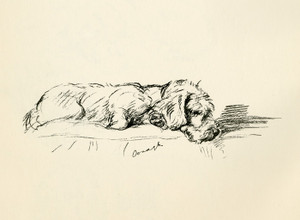 Art Prints of Oonagh 5, Wire Haired Dachshund by Lucy Dawson