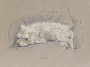 Art Prints of Patch, a Wire Haired Terrier by Lucy Dawson