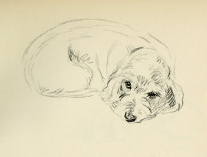 Art Prints of Oonagh, Wire Haired Dachshund by Lucy Dawson