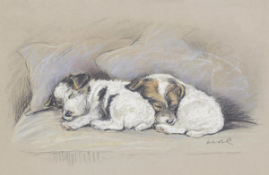 Art Prints of Peace at Last, Sleeping Terrier Puppies by Lucy Dawson