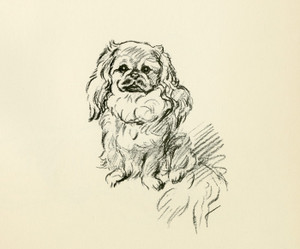 Art Prints of Pekingese 1 by Lucy Dawson