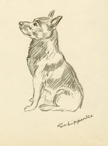 Art Prints of Peter, Schipperke by Lucy Dawson