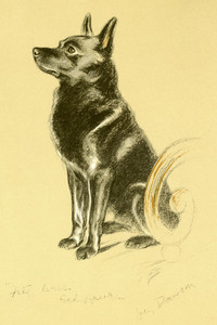 Art Prints of Peter, Schipperke II by Lucy Dawson