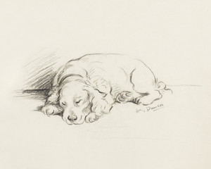 Art Prints of Spaniel by Lucy Dawson