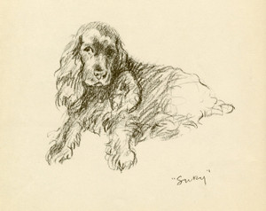 Art Prints of Spaniel, Susan by Lucy Dawson