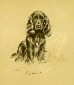 Art Prints of Susan by Lucy Dawson