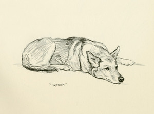 Art Prints of Wanda, German Shepherd by Lucy Dawson