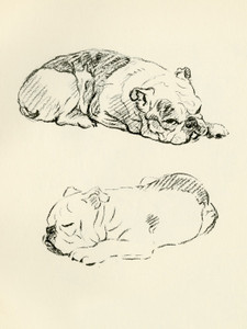 Art Prints of Two Sleeping Bulldogs by Lucy Dawson