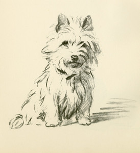Art Prints of West Highland White Terrier by Lucy Dawson