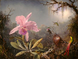 Art Prints of Cattleya Orchid and Three Hummingbirds by Martin Johnson Heade