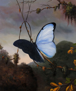 Art Prints of Blue Morpho Butterfly by Martin Johnson Heade