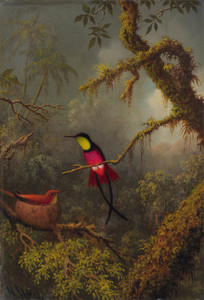 Art Prints of A Pair of Nesting Crimson Topaz Hummingbirds by Martin Johnson Heade