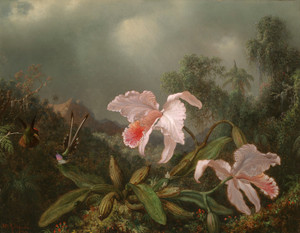Art Prints of Jungle Orchids and Hummingbirds 1872 by Martin Johnson Heade
