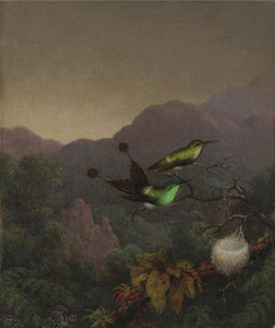 Art Prints of Racket-Tail, Brazil by Martin Johnson Heade