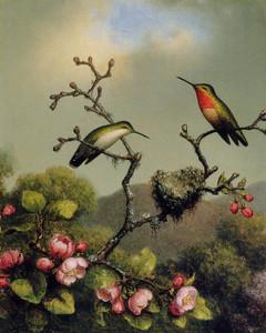 Art Prints of Ruby Throat of North America by Martin Johnson Heade