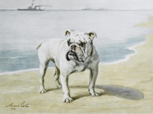Art Prints of British Bulldog by Maud Earl