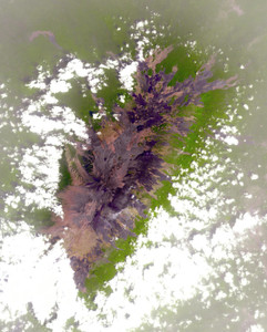 Art Prints of Mount Cameroon by NASA