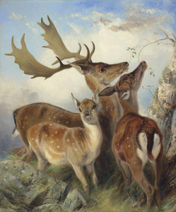 Art Prints of Fallow Deer by Richard Ansdell