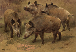 Art Prints of Four Boars in a Landscape by Rosa Bonheur