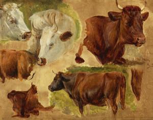 Art Prints of Study of Standing Bulls by Rosa Bonheur
