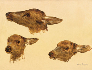 Art Prints of Three Studies of a Doe Head by Rosa Bonheur