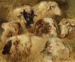 Art Prints of Heads of Sheep and Rams by Rosa Bonheur