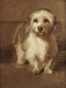 Art Prints of A White Terrier by Samuel Fulton
