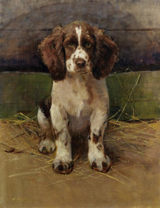Art Prints of Nancy, a Springer Spaniel by Samuel Fulton