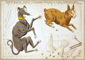 Art Prints of Canis Major, Plate 30, View of the Heavens by Sidney Hall