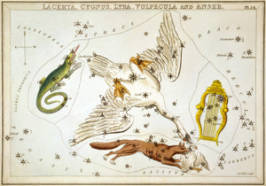 Art Prints of Lacerta Cygnus, Plate 14, View of the Heavens by Sidney Hall