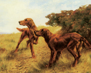 Art Prints of Irish Setters by Thomas Blinks