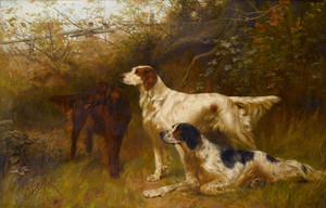 Art Prints of English and Irish Setters by Thomas Blinks