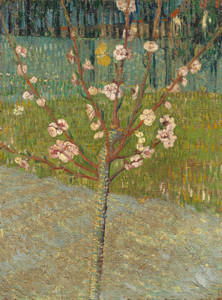 Art Prints of Almond Tree in Blossom by Vincent Van Gogh