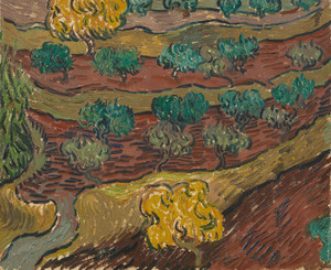 Art Prints of Olive Trees on a Hillside by Vincent Van Gogh