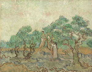 Art Prints of The Olive Orchard by Vincent Van Gogh