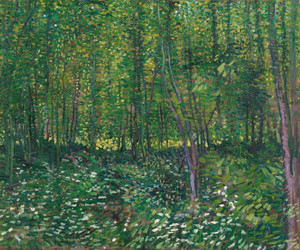 Art Prints of Trees and Undergrowth by Vincent Van Gogh