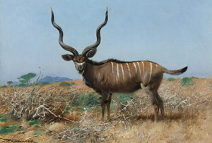 Art Prints of Antelope by Wilhelm Kuhnert