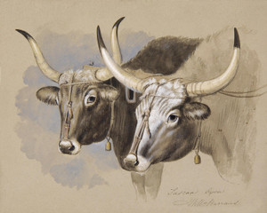 Art Prints of Tuscan Oxen by William Barraud