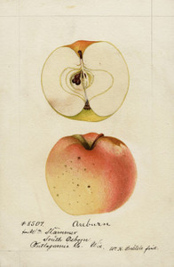 Art Prints of Auburn Apples by William Henry Prestele