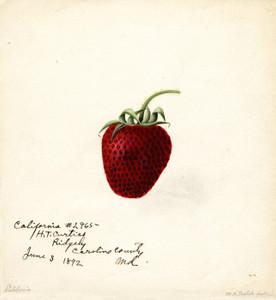 Art Prints of California Strawberry by William Henry Prestele