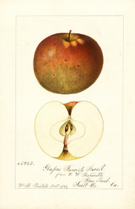 Art Prints of Glasses Favorite Sweet Apples by William Henry Prestele