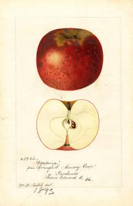 Art Prints of Gardenia Apples by William Henry Prestele
